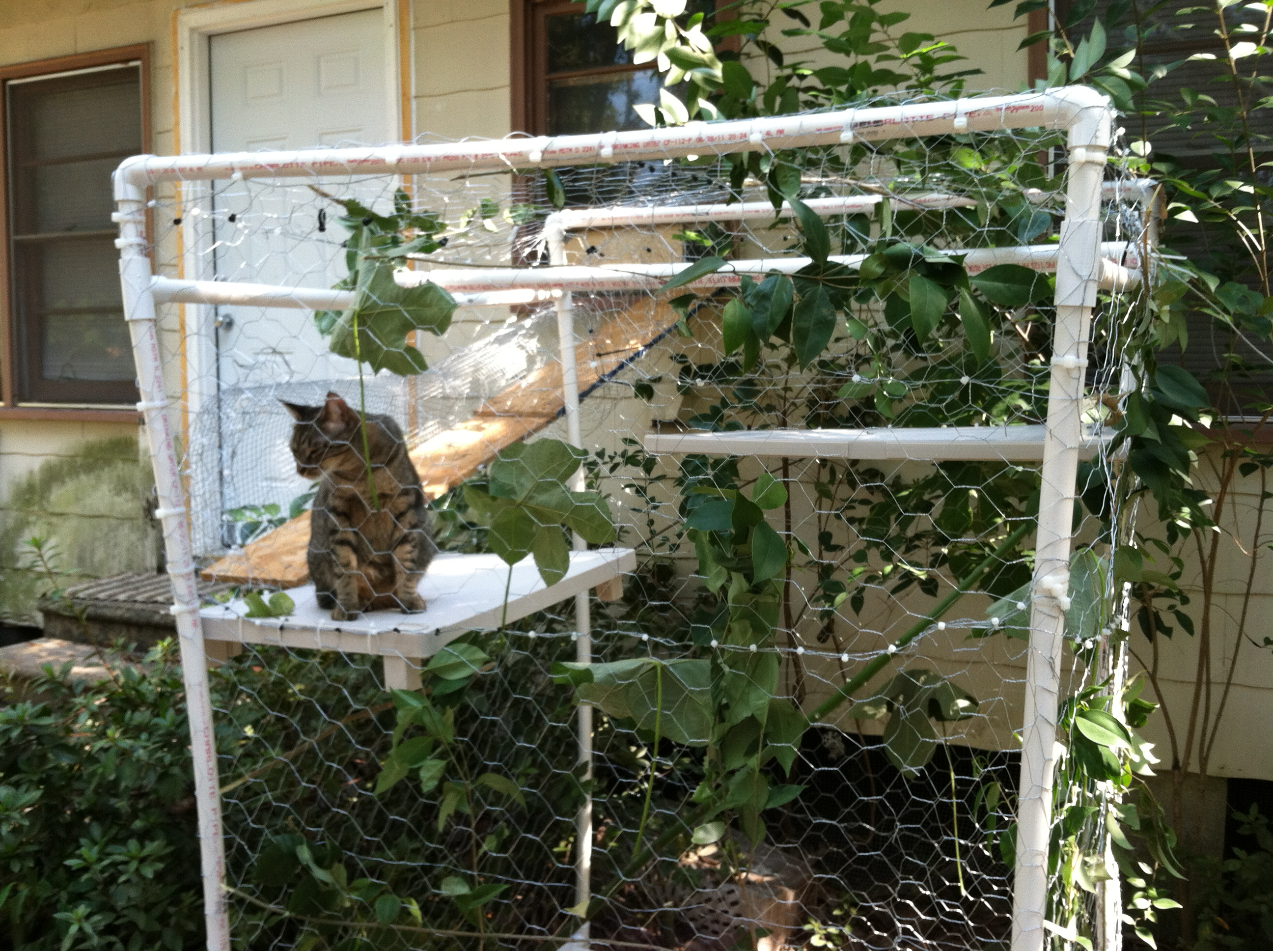 Pin Outdoor Cat Enclosures on Pinterest